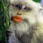 Beautiful Free Funny Monkey Images Pic Download