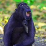 Funny Monkey Images Pics HD Download