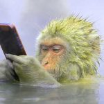 Funny Monkey Images Pics Wallpaper Download Free