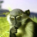 Funny Monkey Images Wallpaper Download Free