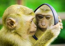 Funny Monkey Images Photo Free