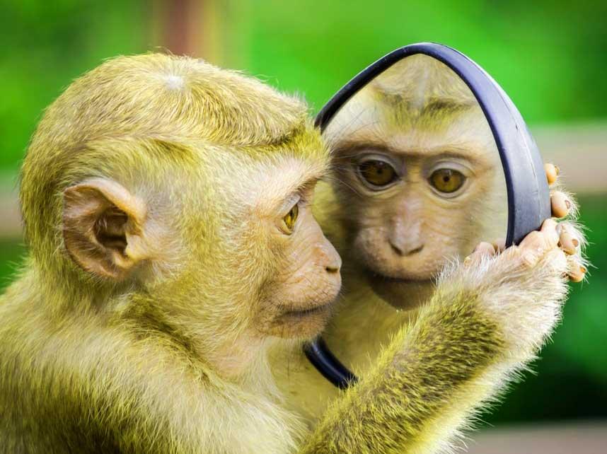 Funny Monkey Images Photo Free
