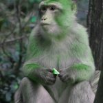 Top Free Funny Monkey Images Pics Download