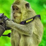 Funny Monkey Images Pics Free Download