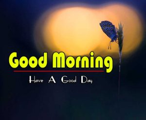 Nature Good Morning Wallpaper Latest Download