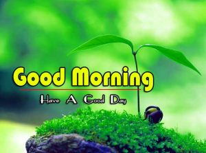 Latest Free Nature Good Morning Pics Images Download