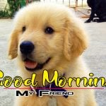 New Latest Puppy Lover Good Morning Photo Images