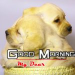 New Puppy Good Morning Latest Images