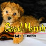 New Puppy Lover Good Morning Hd Images