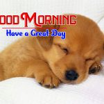 New Puppy Lover Good Morning Photo Free Downoad