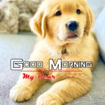 New Puppy Lover Good Morning Photo Pictures