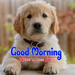 New Puppy Lover Good Morning images Free Hd Photo