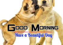 Photo Free Download Puppy Lover Good Morning