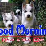 Pics Puppy Lover Good Morning Images