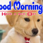 Puppy Good Morning Hd Free Images