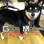 Puppy Good Morning Images