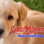 Puppy Good Morning Images Hd Pics Free