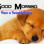Puppy Lover Good Morning Hd Free Download Images