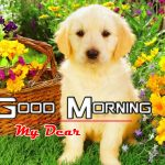 Puppy Lover Good Morning Hd Images Free