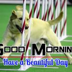 Puppy Lover Good Morning Images Download Hd