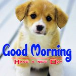Puppy Lover Good Morning Photo