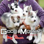 Puppy Lover Good Morning Photo Wallpaper