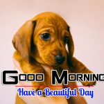 Sad Puppy Lover Good Morning Images Pics