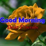 Best Flowers Good Morning Photo Download