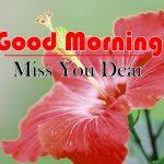 Best Flowers Good Morning Photo wallpaper