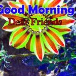 Best Flowers Good Morning wallpaper Pics