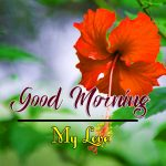 Flower Good Morning Images pics hd Download