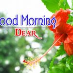 Best New Flower Good Morning Images Pics Download