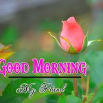 New Free Flower Good Morning Images Pics DOWNLOAD