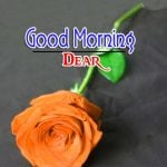 Flower Good Morning Images Pics Download With Rose