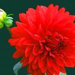Flower Love Whatsapp Dp Pics