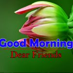 Flowers Good Morning Images Free