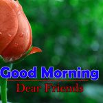 Flowers Good Morning Images Photo
