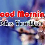 Flowers Good Morning Pics Free