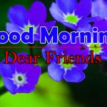 Flowers Good Morning Pics Free Download