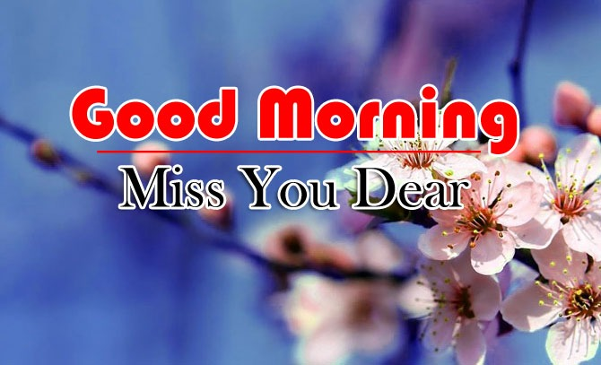 1478+ Very Beautiful Flowers Good Morning Images Download