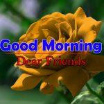 Flowers Good Morning Pics Hd