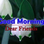 Flowers Good Morning Pictures Hd