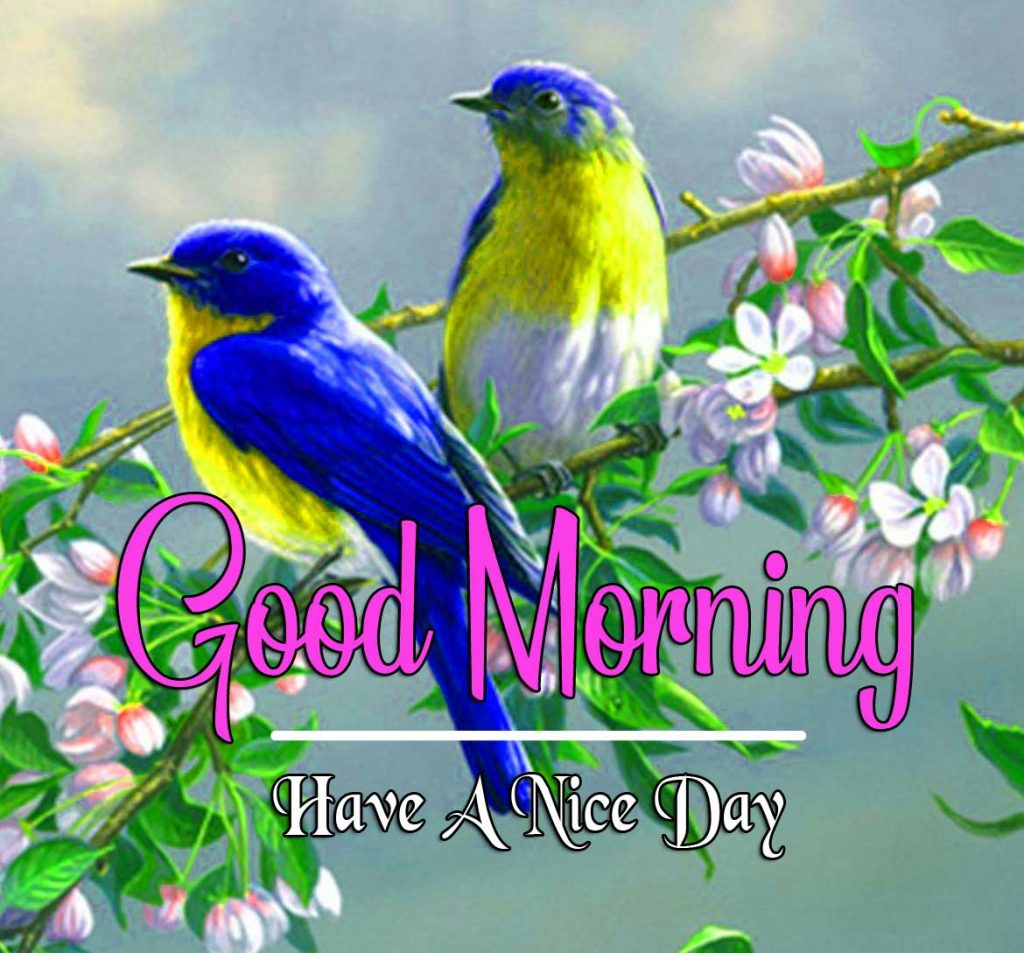 Best Good Morning Images HD Wallpaper Pics Free Download
