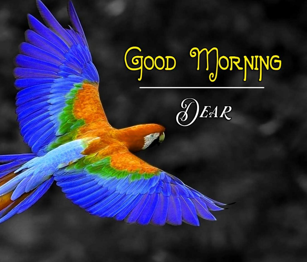 Best Good Morning Images Photo Pics Download