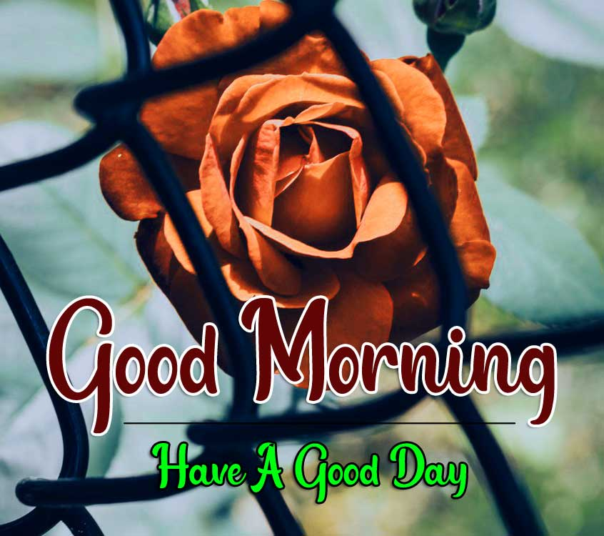 Best Good Morning Images HD Photo pics Download