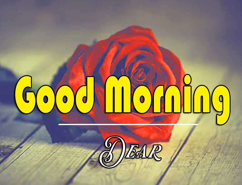 Best Good Morning Images Wallpaper Free With Red Rose