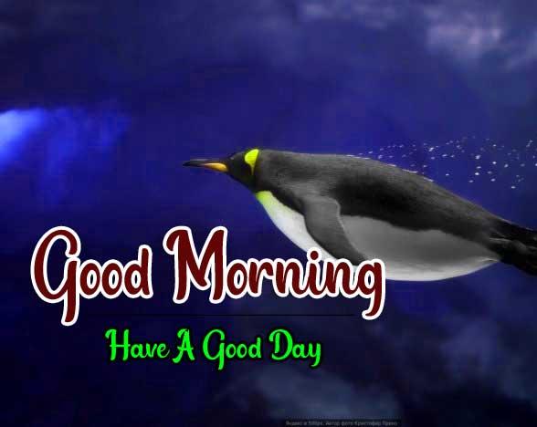 Best Good Morning Images HD Pics Wallpaper Download