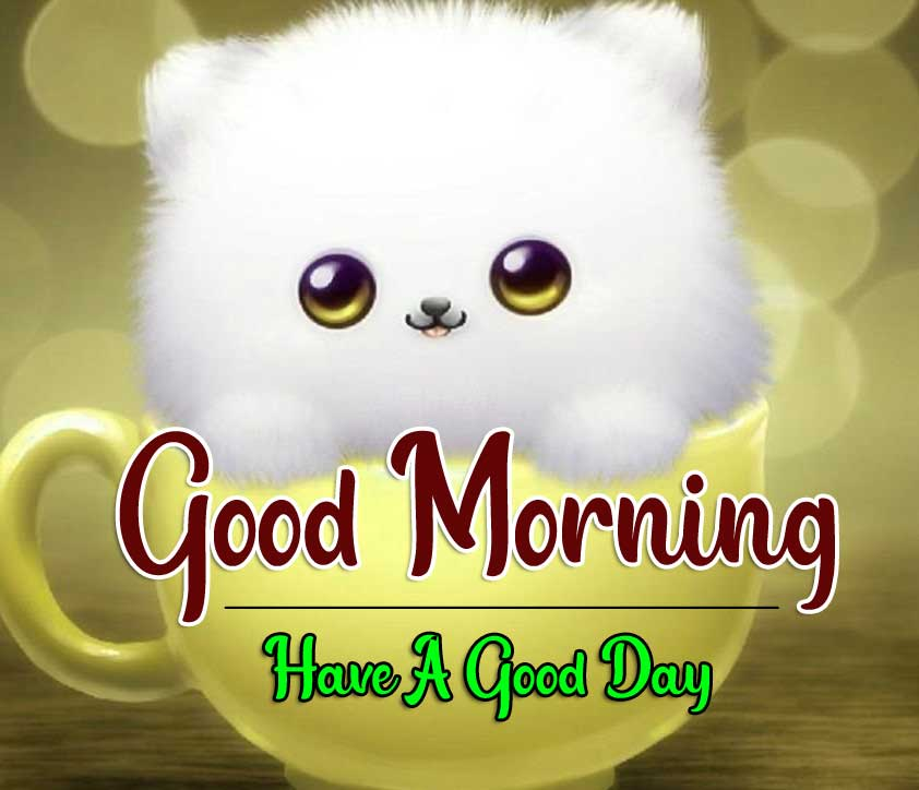 Best Good Morning Images HD Wallpaper Free Download
