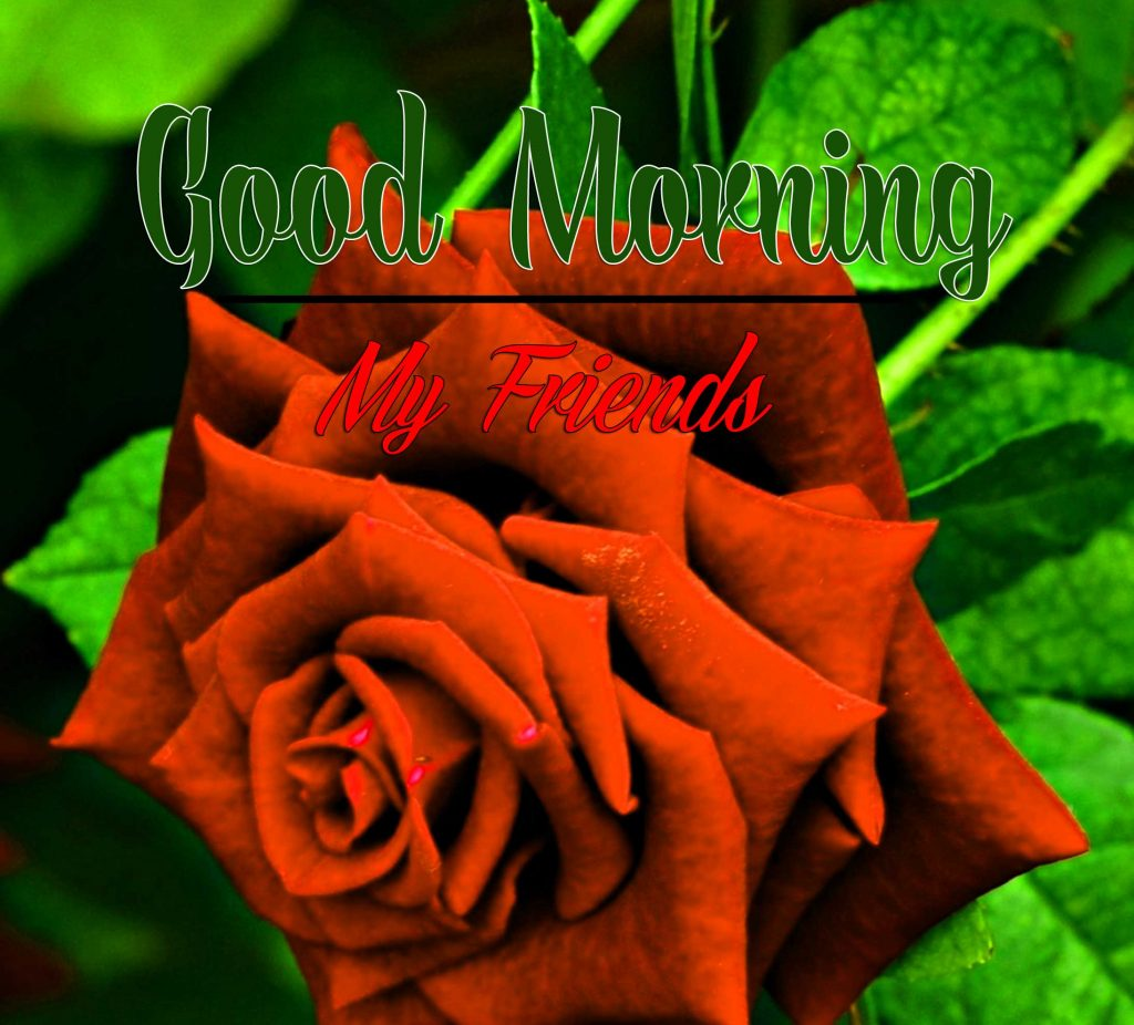 Best Good Morning Images Wallpaper pics Free Download With Rose