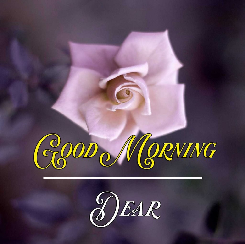 Best Good Morning Images Pics Wallpaper Free Download for Whatsapp
